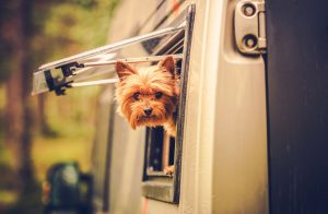 Tips For RV-ing With Your Dog